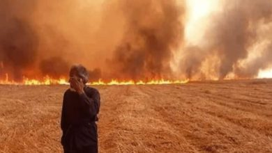 Photo of وجه آخر للحرب القذرة ضد سوريا:إحراق حقول القمح