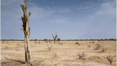 Photo of إفريقيا تستلهم من الصين للحد من التصحر